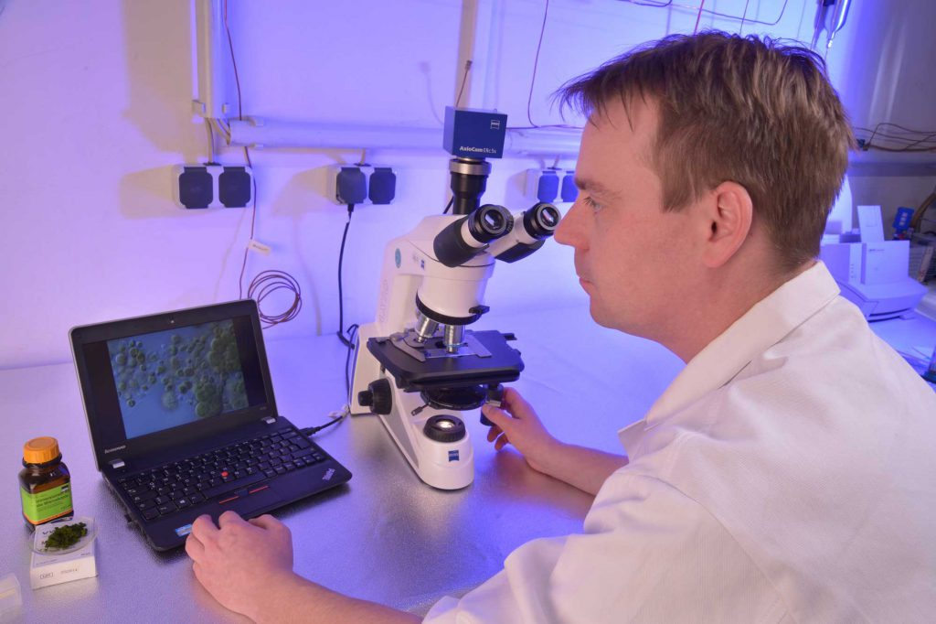Microscopic examination of microalgae at IUE