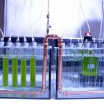 Microalgae cultivation at the laboratory scale reactor at TUHH