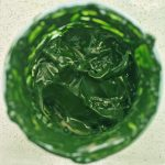 Concentrated Microalgae after harvesting